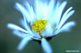 fotografía naturaleza benji santos